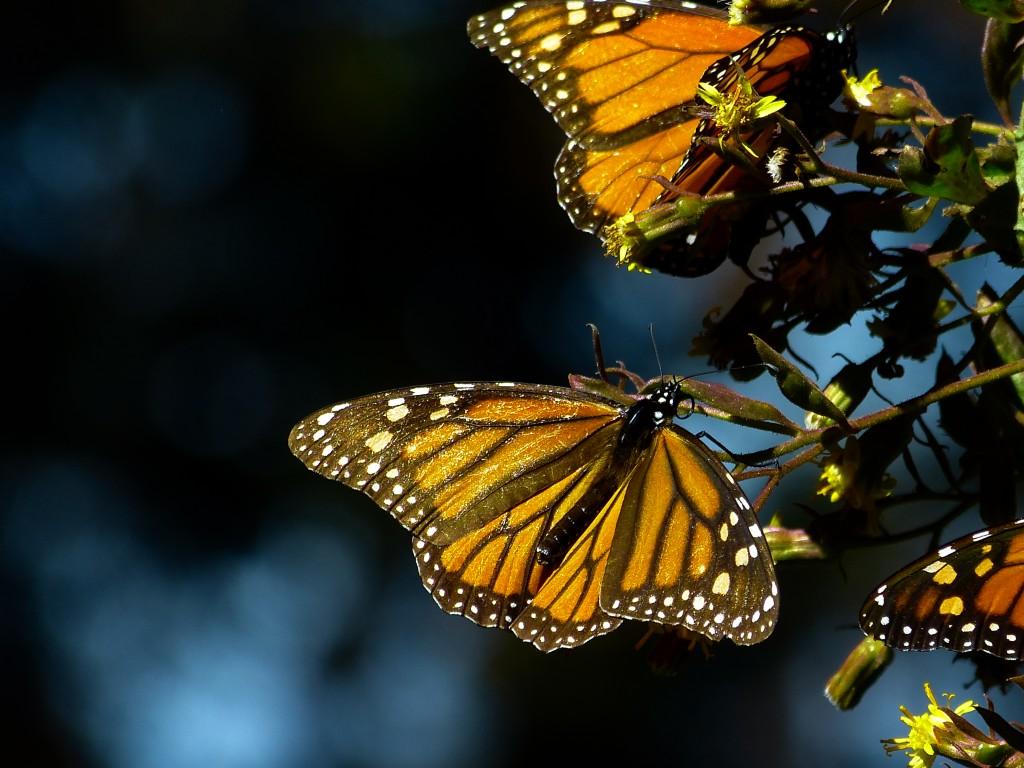 Papillon de lumière sous les projecteurs