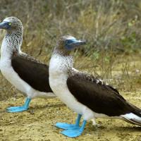On a testé les Galapagos des pauvres (avant d'aller à Cuenca)