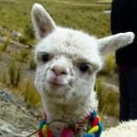 Huaraz, Pérou